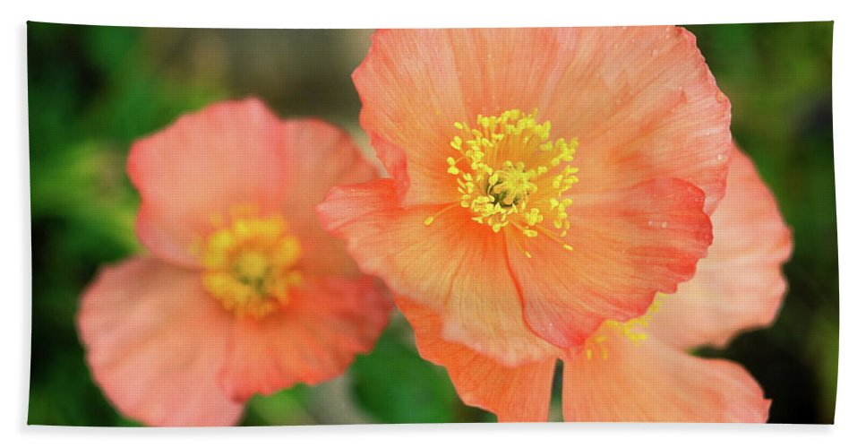 Peach Poppies Beach Towel featuring the photograph Peach Poppies by Sally Weigand