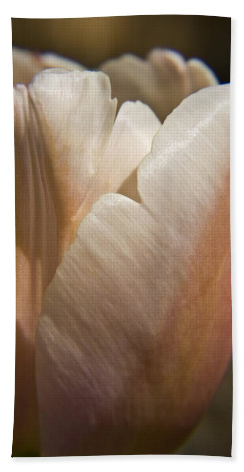 Peach Beach Towel featuring the photograph Peach Tulip by Teresa Mucha