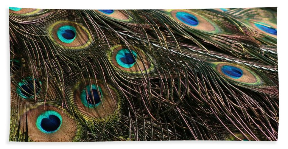 Peacock Beach Towel featuring the photograph Peacock Feathers by Tina Meador