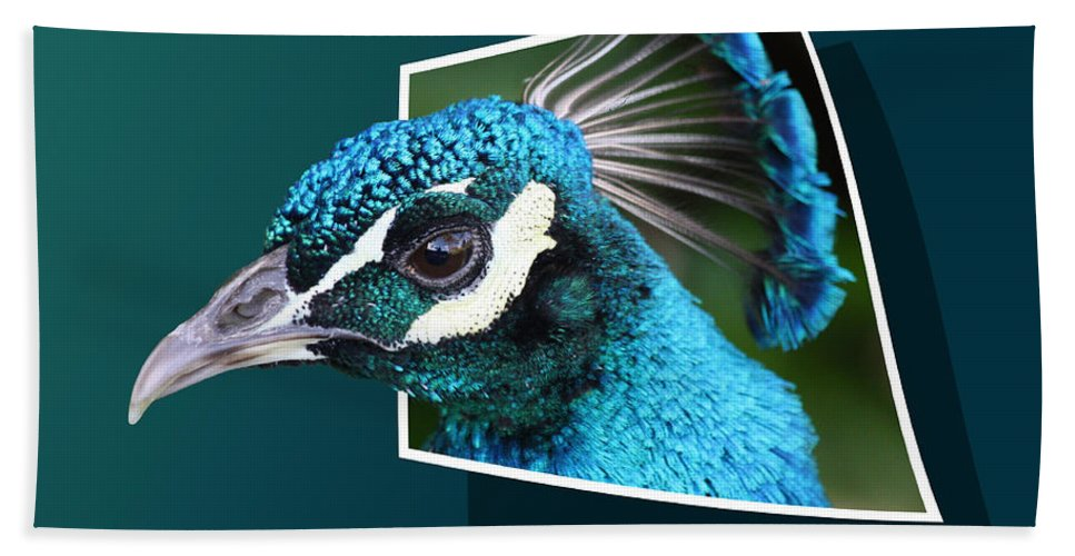 Peacock Beach Towel featuring the photograph Peacock by Shane Bechler
