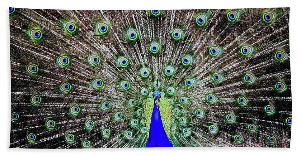 Peacock Beach Towel featuring the photograph Peacock by Vivian Krug Cotton