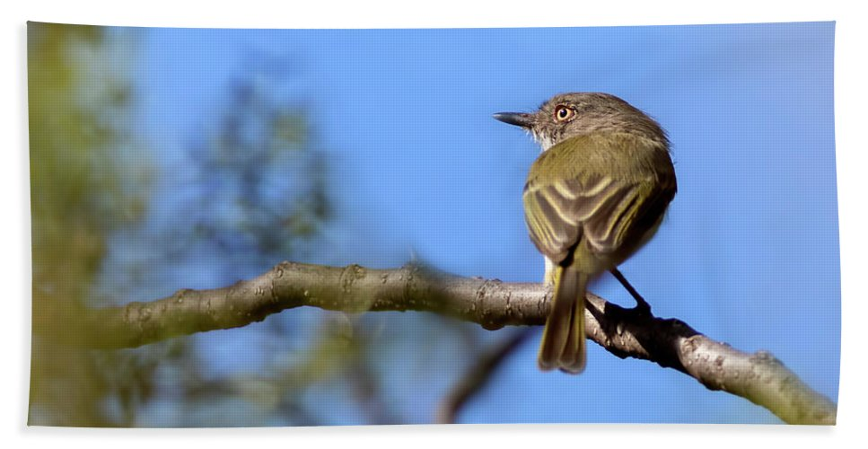 Bird Beach Towel featuring the photograph Pearly-vented Tody-tyrant by Pablo Rodriguez Merkel
