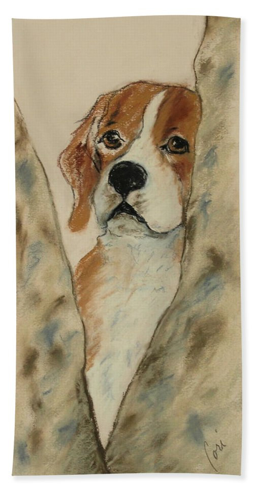 Beagle Beach Towel featuring the drawing Peek A Boo by Cori Solomon