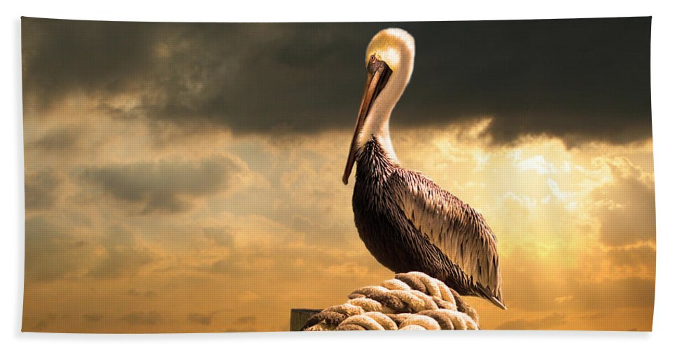Pelican Beach Sheet featuring the photograph Pelican After A Storm by Mal Bray