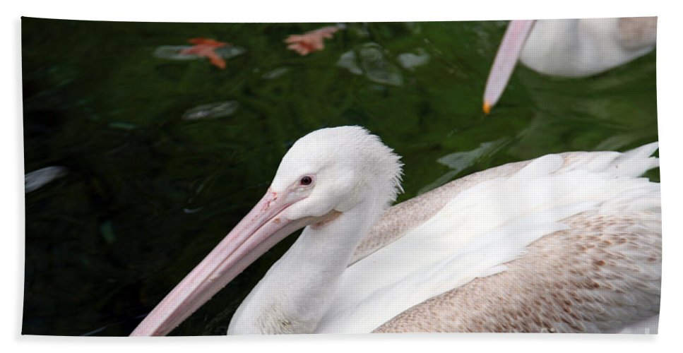 Pelican Beach Sheet featuring the photograph Pelican by Amanda Barcon