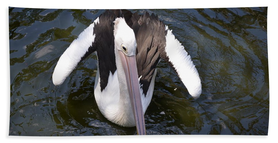Pelican Beach Towel featuring the photograph Pelican Down Under by Mark J Dunn