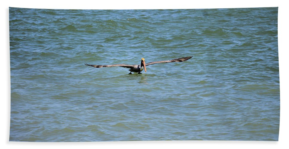 Pelican Beach Towel featuring the photograph Pelican On The Move by Deborah Weinhart