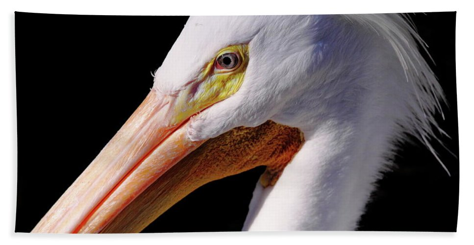 Pelican Beach Towel featuring the photograph Pelican Portrait by Bruce J Robinson
