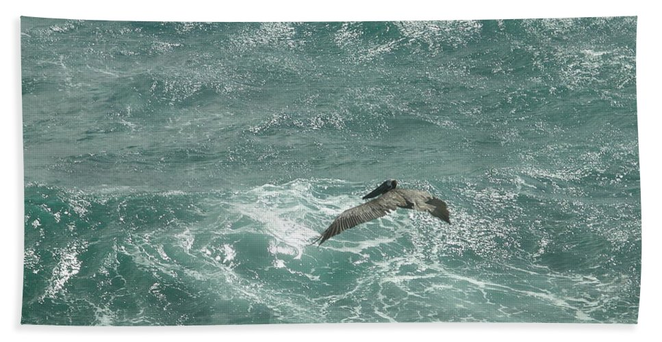 Bird Beach Towel featuring the photograph Pelican by Rich Bodane