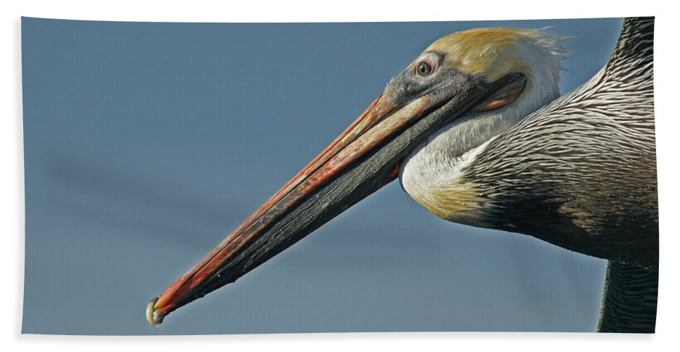 Animals Beach Towel featuring the photograph Pelican Upclose by Ernie Echols