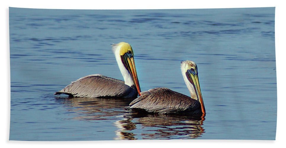 Pelican Beach Towel featuring the painting Pelicans 2 Together by Michael Thomas