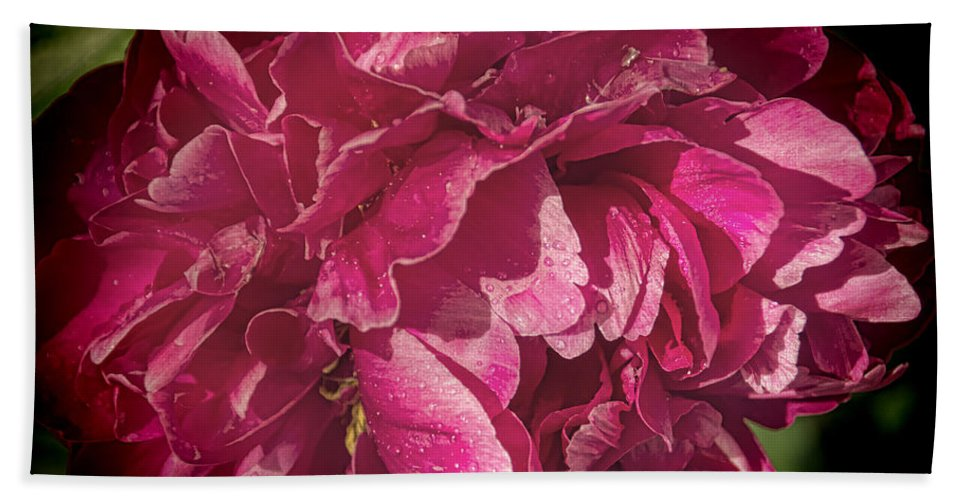 Pink Beach Towel featuring the photograph Peony In The Rain by Janice Pariza