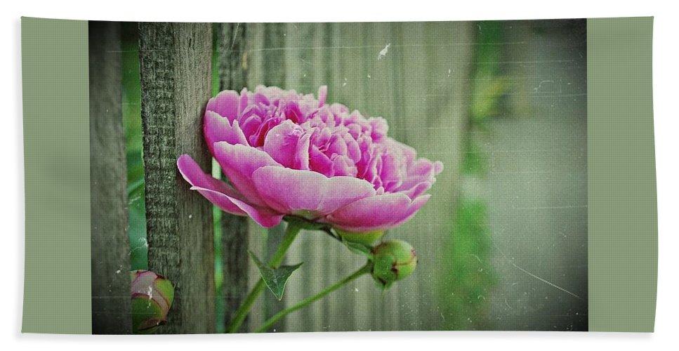 Flowers Beach Sheet featuring the photograph Peony Time by Marija Djedovic