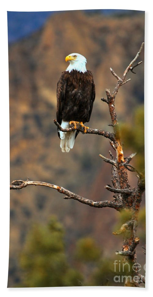 Eagle Beach Towel featuring the photograph Perched At Smith Rock by Adam Jewell