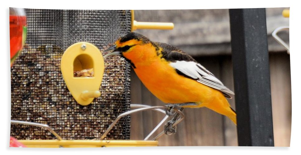 Bird Beach Towel featuring the photograph Perched Oriole by Wendy Fox