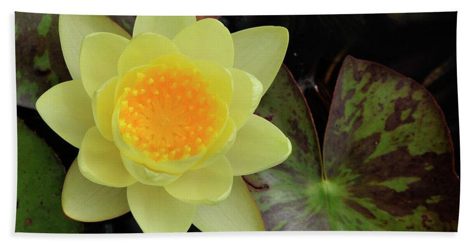 Water Lilly Beach Towel featuring the photograph Perfect Flower by David Arment