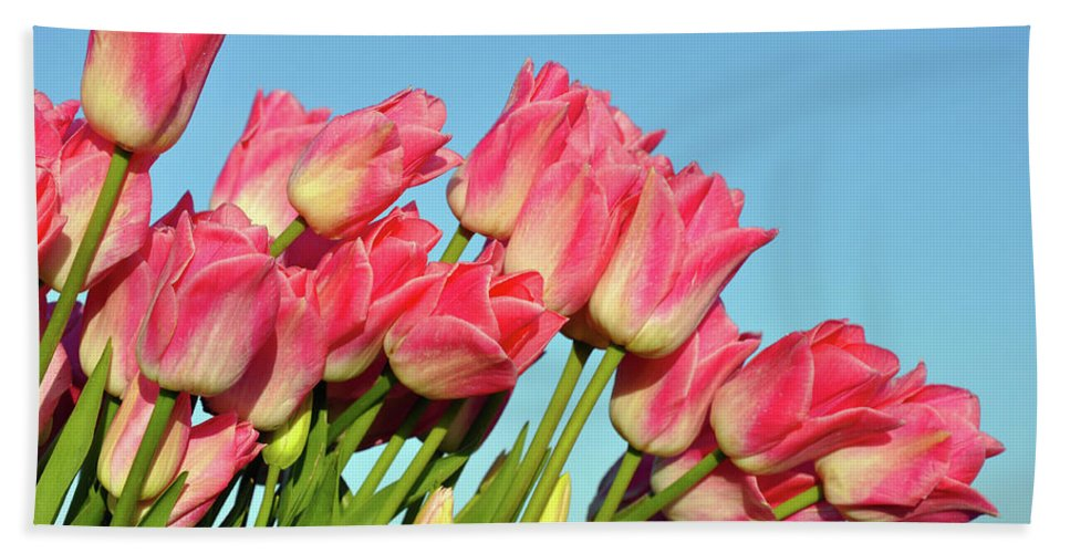 Tulips Beach Towel featuring the photograph Perfect Pink Tullips by Perl Photography