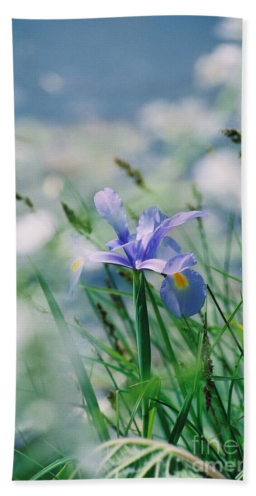 Periwinkle Beach Sheet featuring the photograph Periwinkle Iris by Nadine Rippelmeyer