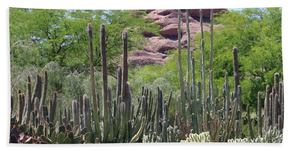 Desert Beach Towel featuring the photograph Phoenix Botanical Garden by Carol Groenen
