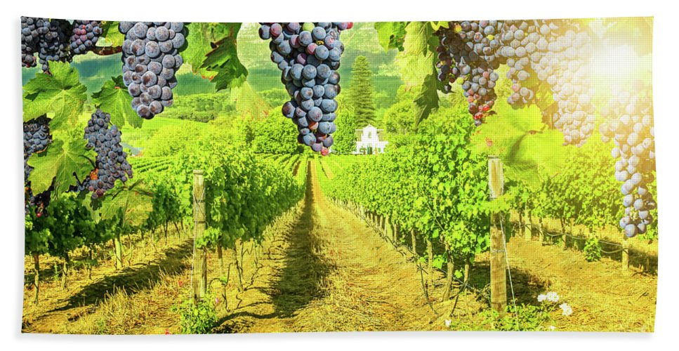 Harvest Beach Towel featuring the photograph Picturesque Vineyard At Sunset by Benny Marty