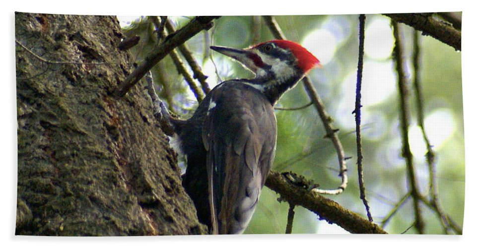Spokane Beach Towel featuring the photograph Pileated Woodpecker by Ben Upham III