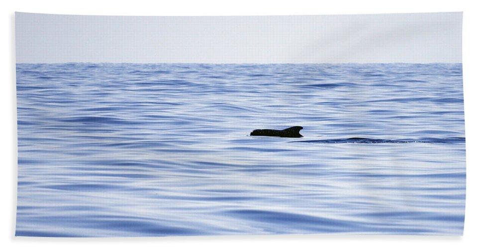 Spain Beach Towel featuring the photograph Pilot Whales 2 by Jouko Lehto