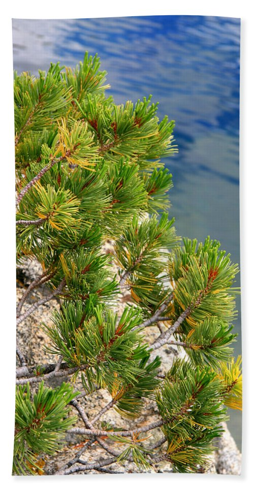 Pine Needles Beach Towel featuring the photograph Pine Needles Over Water by Chris Brannen