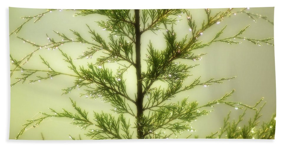 2d Beach Towel featuring the photograph Pine Shower by Brian Wallace