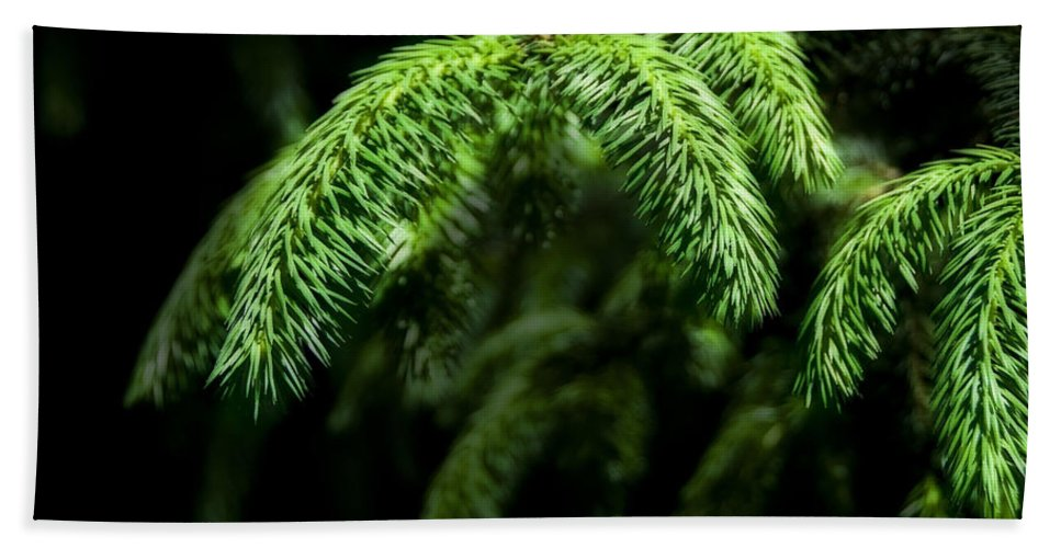 Pine Beach Towel featuring the photograph Pine Tree Brunch by Svetlana Sewell