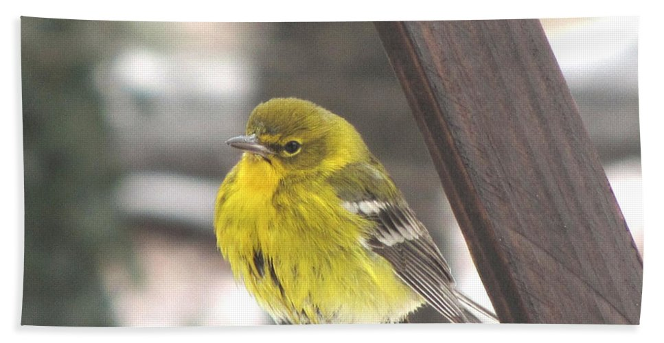 Bird Beach Towel featuring the photograph Pine Warbler by Donna Brown