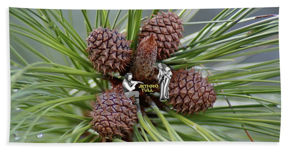 Jethro Tull Beach Towel featuring the photograph Pinecone Tull by Ben Upham