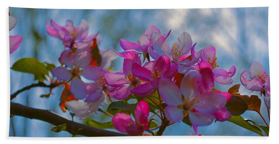 Crab Beach Towel featuring the photograph Pink And Blue by Bonfire Photography