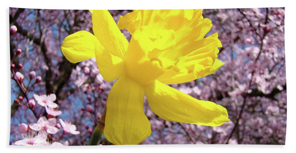 Nature Beach Towel featuring the photograph Pink Blossom Spring Trees Yellow Daffodil Flower Baslee Troutman by Baslee Troutman