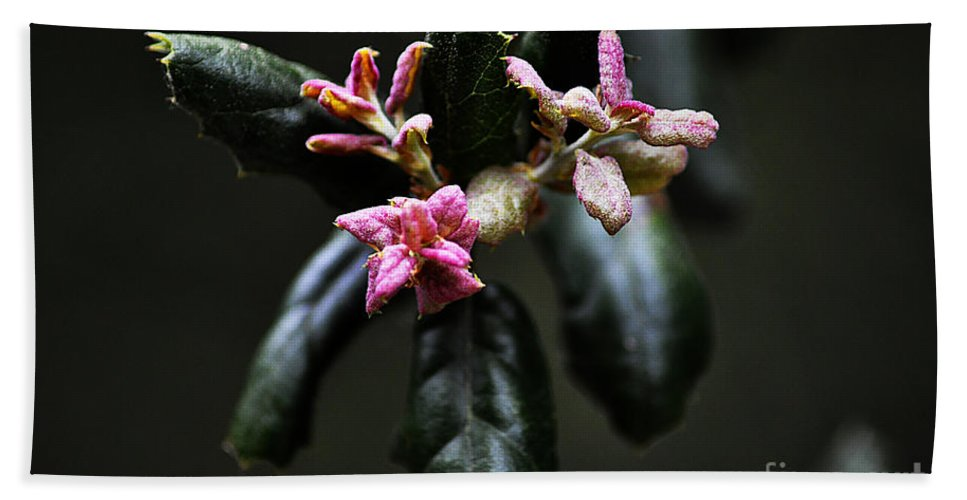 Clay Beach Sheet featuring the photograph Pink Bud by Clayton Bruster