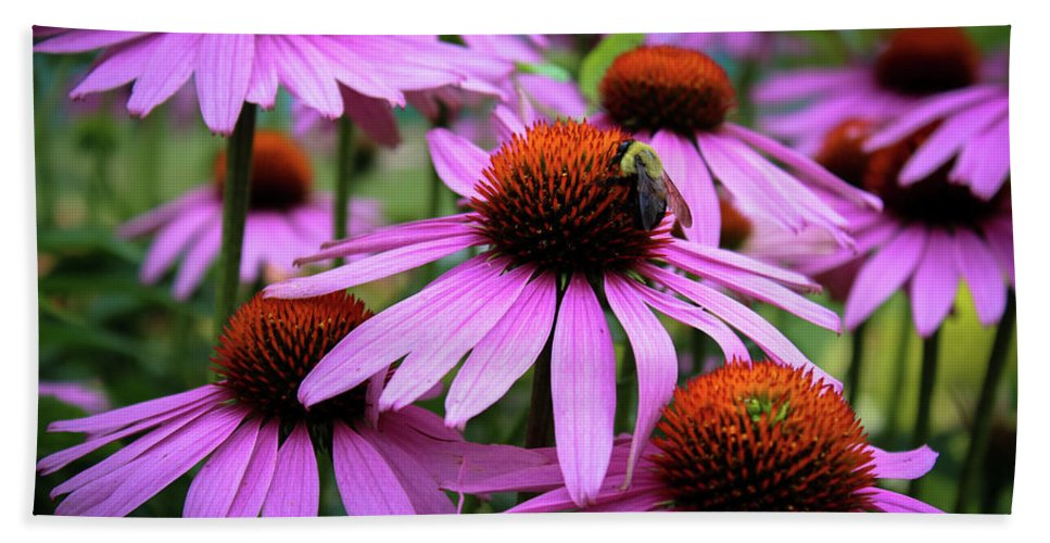 Jeanette Wygant Photography Beach Towel featuring the photograph Pink Coneflowers by Jeanette Wygant