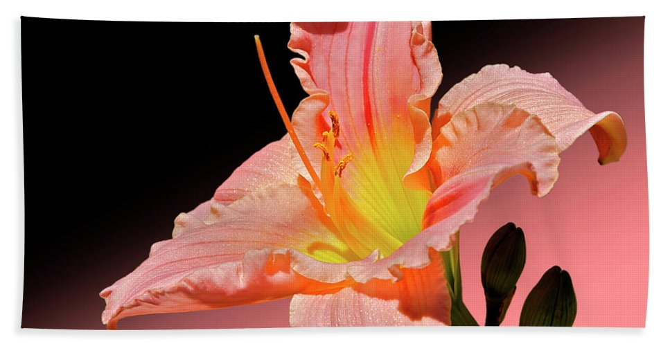Daylily Beach Towel featuring the photograph Pink Daylily by Phyllis Denton