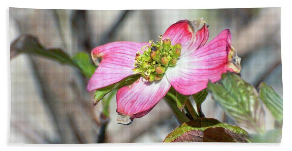 Pink Dogwood Beach Towel featuring the photograph Pink Dogwood by Kerri Farley