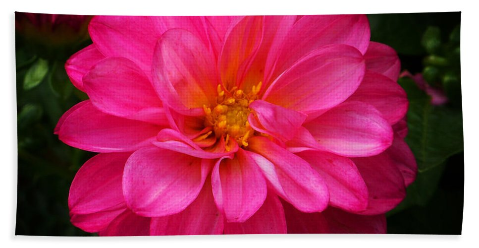 Flower Beach Towel featuring the photograph Pink Flower by Anthony Jones