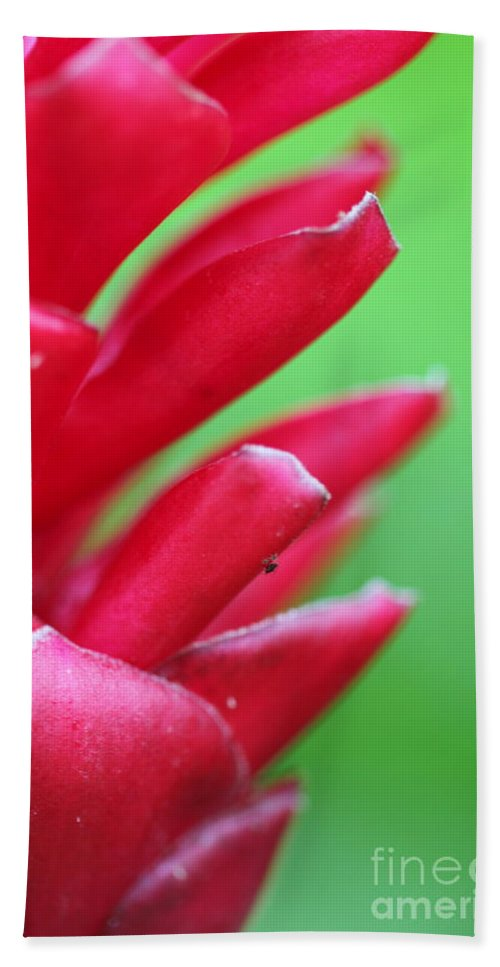 Ginger Beach Towel featuring the photograph Pink Ginger by Nadine Rippelmeyer