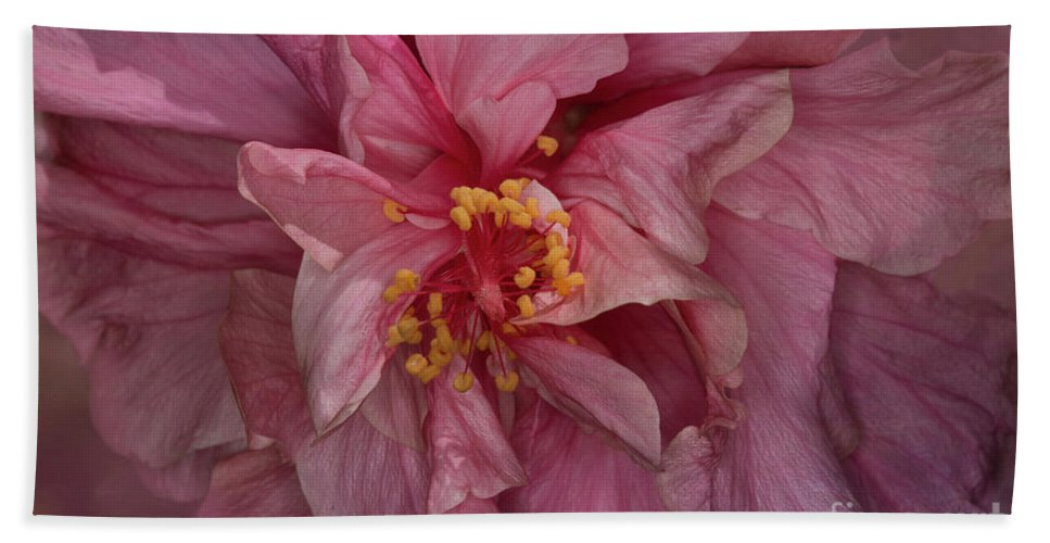 Hibiscus Beach Towel featuring the photograph Pink Hibiscus by Elisabeth Lucas