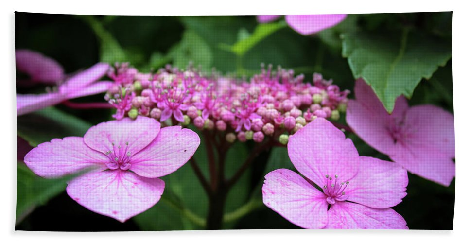 Jeanette Wygant Photography Beach Towel featuring the photograph Pink Hydrangea by Jeanette Wygant