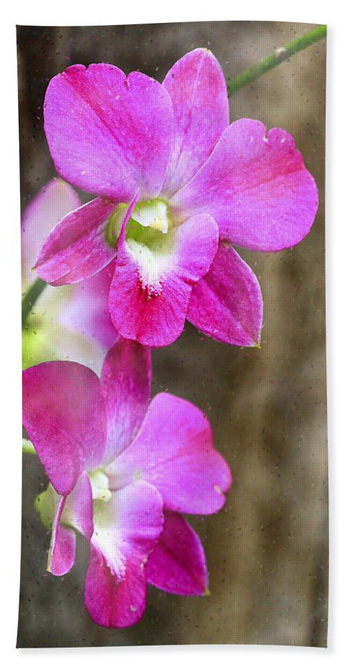 Orchids Beach Towel featuring the photograph Pink Orchid Duo by Deborah Benoit