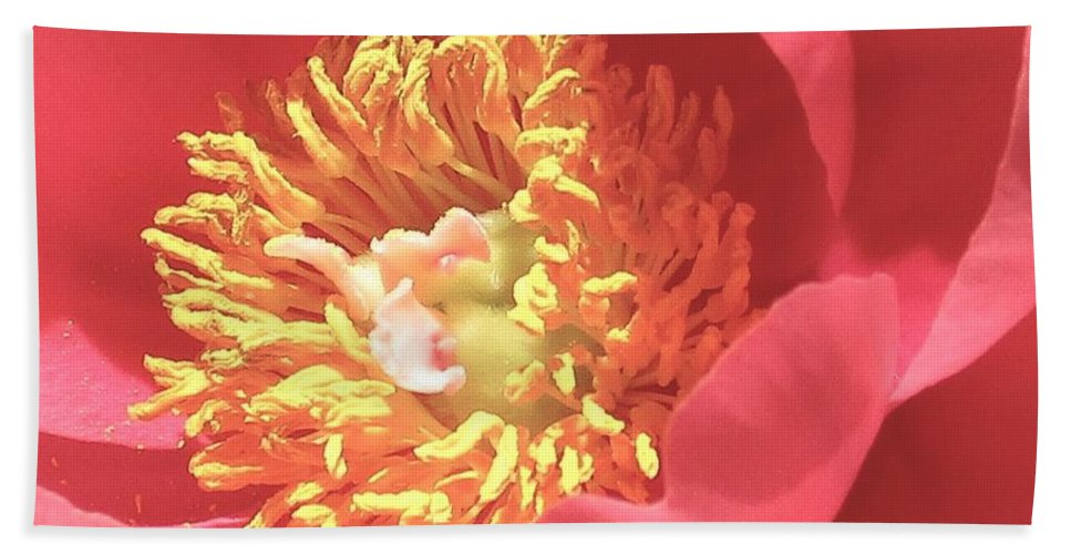 Floral. Petals Beach Towel featuring the photograph Pink Peony by Rosemary Meier