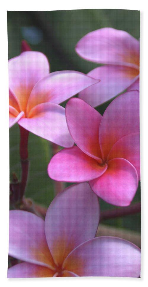 Plumeria Beach Towel featuring the photograph Pink Plumeria by Brian Harig