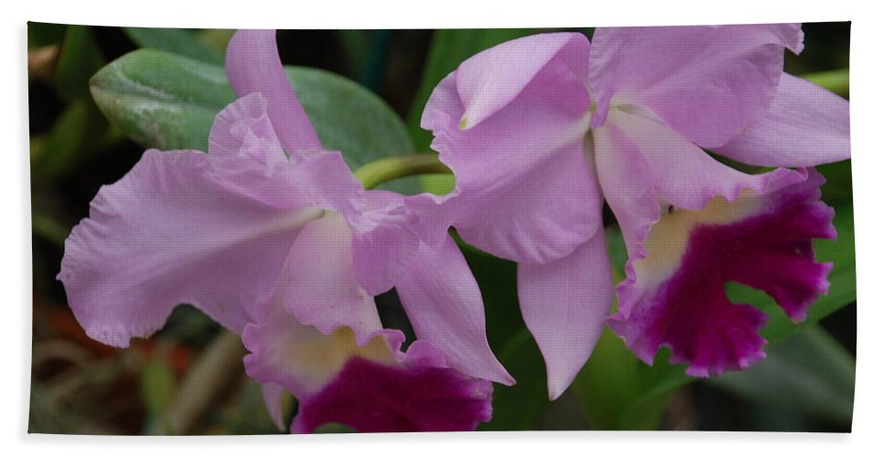 Macro Beach Towel featuring the photograph Pink Purple Orchids by Rob Hans