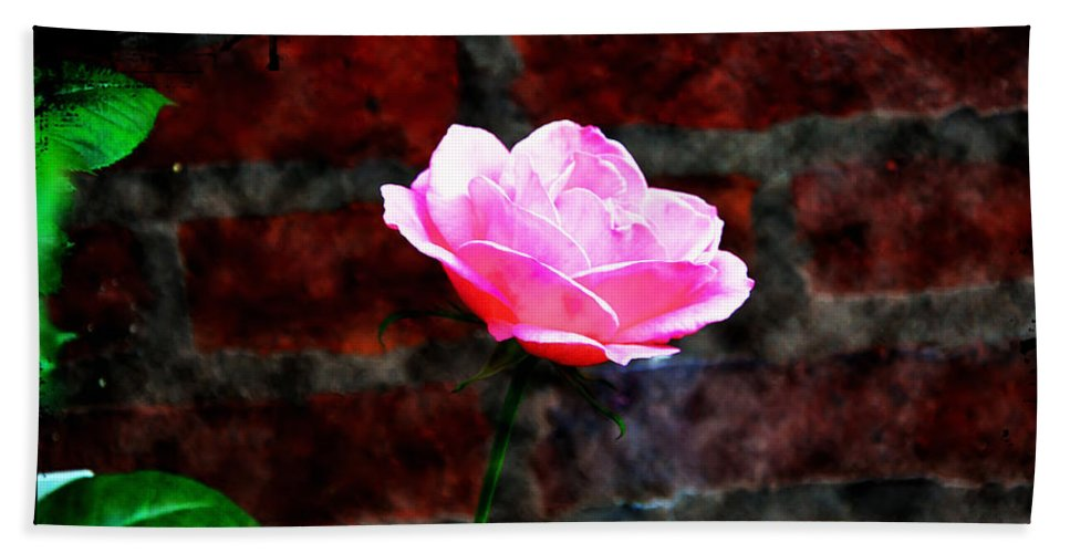 Rose Beach Towel featuring the photograph Pink Rose On Red Brick Wall by Bill Cannon