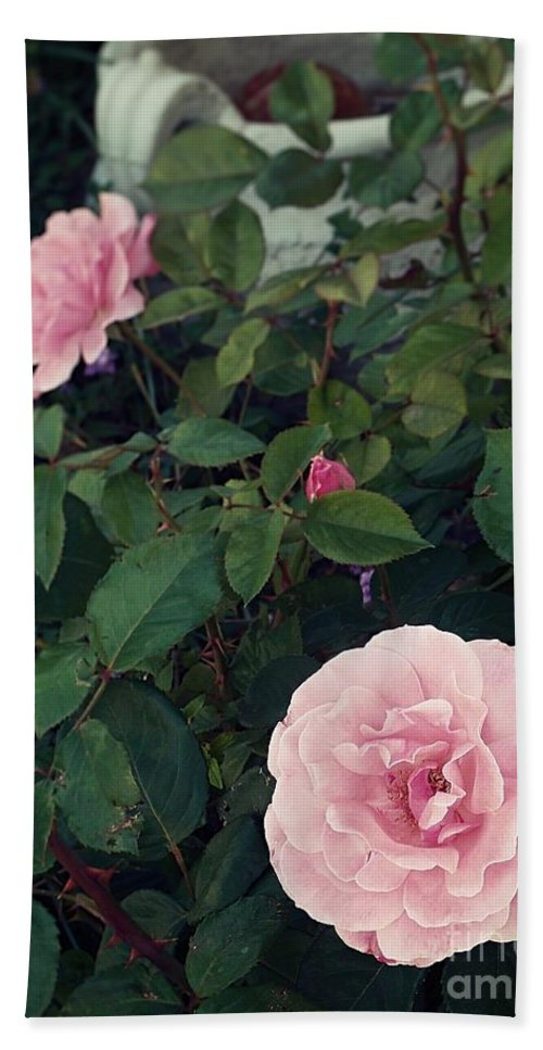 Three Pink Roses Bud Beach Towel featuring the photograph Pink Rose by Thomas Dudas