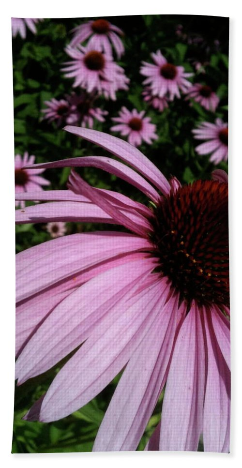 Beach Towel featuring the photograph Pink Sweetie by Trish Hale