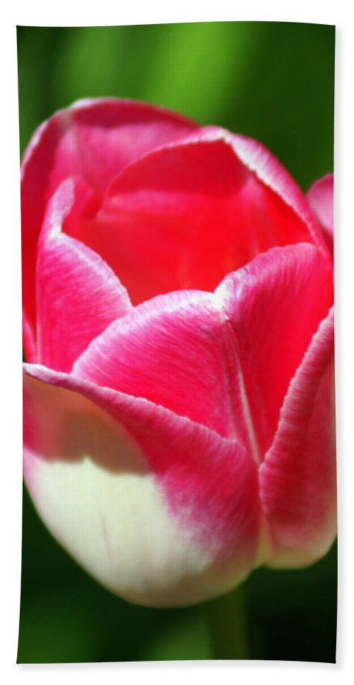 Flower Beach Towel featuring the photograph Pink Tulip by Marty Koch