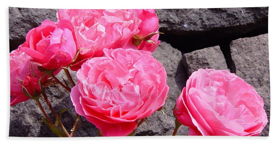 Roses Beach Towel featuring the photograph Pinks On The Rocks by Loretta Luglio